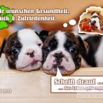 Montage_Geburtstag_Hunde_druckfrei